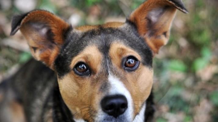 Geresnės gyvūnų laikymo sąlygos – pirmas žingsnis žengtas
