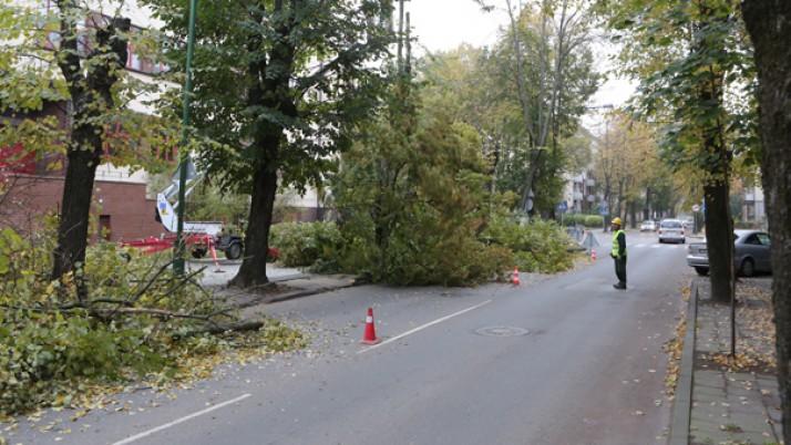 I. Kanto gatvėje bus keičiami šaligatviai ir persodinami medžiai